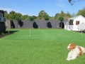 artificial golf green Melbourne - pet friendly