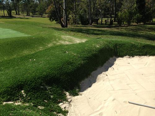 bunker-grass1