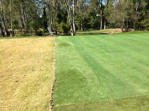 The left side of green. The fringe grass here is Australian GOLD. Note the small mound for effect